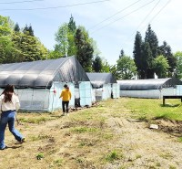 大棚镀锌管 果树种植 免费咨询