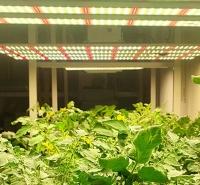 苏州八爪鱼植物补光灯哪里买?