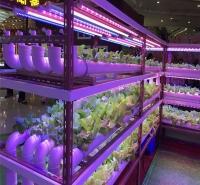 龙岩植物生长灯厂家直销全光谱植物生长灯 温室植物生长灯 LED植物灯